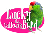 Lucky Bird Books